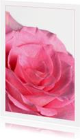 Bloemenkaarten - Ansichtkaart -Roos  1