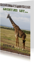 Giraffe 0