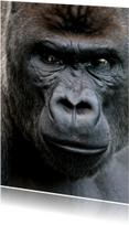 Gorilla 1 - OT