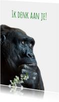 gorilla in gedachten-isf