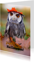 Happy Halloween Owl