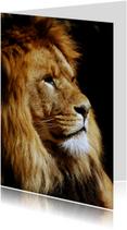 Leeuw kijkt opzij