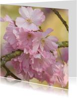 Bloemenkaarten - 4k roze bloesem van prunusboom