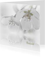 Bedankkaart na overlijden-witte bloesem