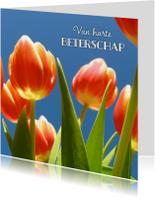 Beterschapskaarten - beterschapskaart tulpen II - LB