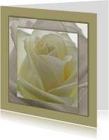 bloemenkaart rozen MM