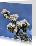 Bloemenkaarten - bloesems
