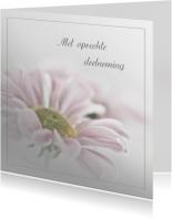 Condoleance met roze chrysant