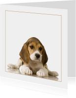 Dierenkaart beagle Puppy