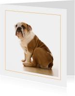 Dierenkaart Engelse bulldog