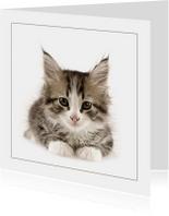 Dierenkaart Kitten