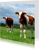 Dierenkaart koeien - bruin