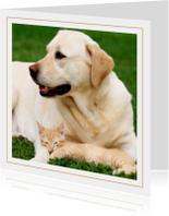 Dierenkaart labrador met kat
