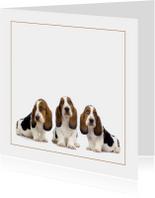 Dierenkaart met drie lieve pups