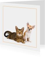 Dierenkaart met kat en chihuahua
