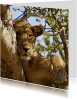 Dierenkaart tijger in boom