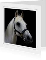 Dierenkaart wit paard 2