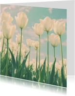 een veld met tulpen
