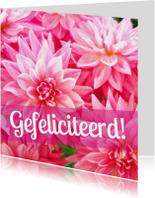 Felicitatiekaarten - Gefeliciteerd roze dahlias