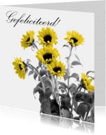 Gefeliciteerd zonnebloemen