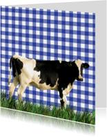 Hollandse koe in het gras