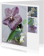 Felicitatiekaarten - Jubileumkaart orchidee paars