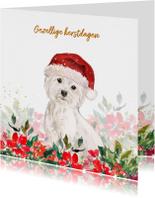 Kerstkaart met Maltezer hond, kerstmuts en kerstgroen