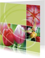 Kleurrijke tulpenkaart met groen en roze