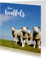 Lieve Knuffels Lammetjes - Lente - OT
