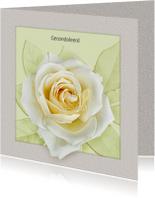 Mooie condoleancekaart met witte roos in kader
