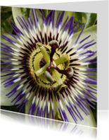 Bloemenkaarten - Passiebloem