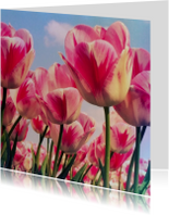 Bloemenkaarten - roodwitte tulpen