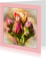 Bloemenkaarten - rozen knopje