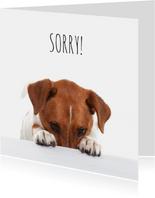 Sorry kaarten - Sorry kaart - Boris de hond - Spijt