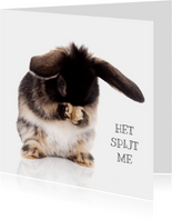 Sorry kaarten - Sorry kaart konijntje