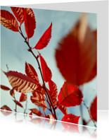 Sterkte kaarten - sterkte met rode blaadjes