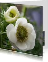 Bloemenkaarten - witte anemonen