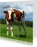 Zomaar kaarten - Zomaar nieuwsgierige koe
