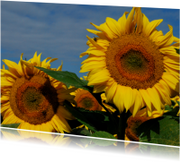 Fotokaart Zonnebloemen