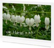 Verjaardagskaarten - Hartbloemen