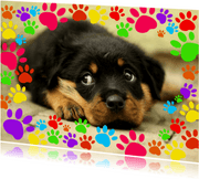 Hondenpootjes - DH
