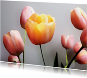 Tulpen roze oranje schilderstijl
