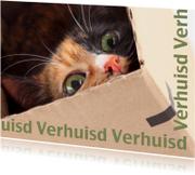 Verhuisd kat in doos