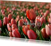 Verjaardagskaart rode tulpen OT