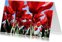 Bloemenkaart Tulpenveld - BK