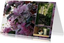 Bloemenkaarten - bloesem en kat
