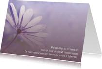 Condoleancekaarten - Condoleance Anemoon - AS