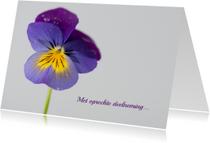 Condoleancekaarten - condoleance viooltje1
