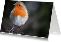 Dierenkaart met een foto van een roodborstje