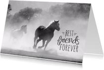 Dierenkaart paarden vriendschap